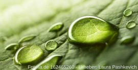 Wir helfen Ihnen die Umwelt nachhaltig zu schonen
